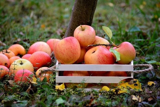 apple-3695288_640